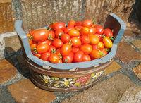 Pflaumen-Buschtomate, Romello, F1, Tomate, Lycopersicon, esculentum