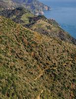 Wanderweg in den Cinque Terre bei Manarola und Corniglia,Italienische Riviera,Ligurien,Italien