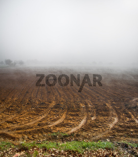 Beautiful foggy morning in countryside (farm field)