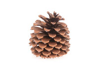 Single pine cone isolated