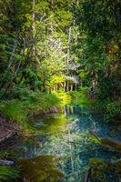 Whakarewarewa Redwood forest, Rotorua, New Zealand