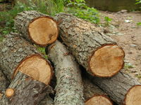pile sawed firewood