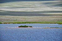 Small Mongolian lake. A flock of gulls sits near the water on the island. Mongolia