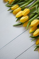 Row of fresh Yellow tulips on white wooden table