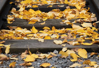 Old railway with yellow fallen leaves at autumn