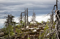 Dead dry trees of bizarre strange shape on top of Northern hills