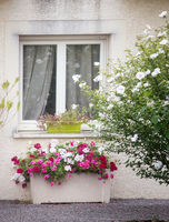 window and flower beds