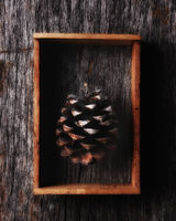 Pine Cone in a wood shadow box