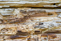 Old rotten cracked wood