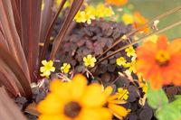 beautiful yellow flowers background