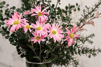 Bouquet of pink chrysanthemums in a glass vase