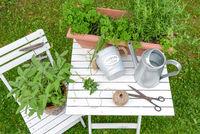 Kräuter und Garten Utensilien auf weißem Holz Hintergrund von oben