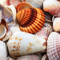 Various seashells in summer
