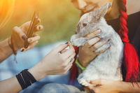 Two Girls with Rabbit on Nature Taking a Photo of Rabbit