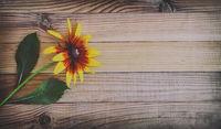 Beautiful flower rudbeckia against the light wood