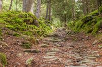 Hiking trail in mossy forest