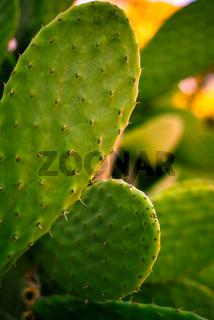 Cactus Growing in Desert Garden