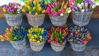 Ceramic Tulips Baskets