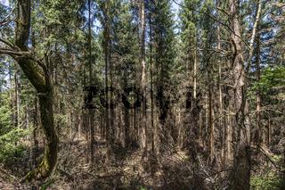 Große Schäden am Wald