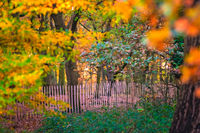 Wooden primitive fence in a park in autumn
