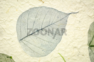 mulberry paper close-up with boda leaf
