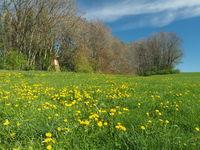 Hochsitz an Frühlingsiwese im Allgäu, Bockjagd