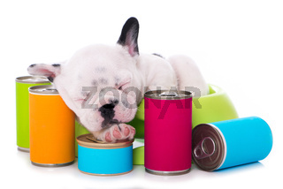 Schlafender Welpe mit Hundefutter