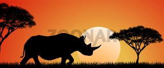 Wild African rhino at sunset