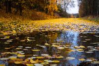 Herbst, Weg mit Pfütze und Laub