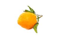 Orang fruit isolate.