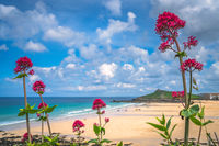 Pink flowers over the Porthmeor beach