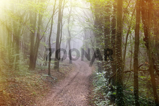 The road leads to the misty forest