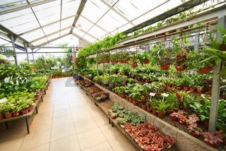 Gewächshaus in einer Gärtnerei