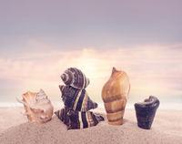 seashells on sand in the beach under sunset sun light