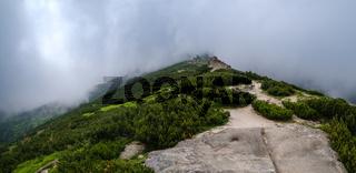 Summer misty morning Carpathian Mountains