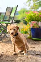 Portriat little cross breed dog in jardin