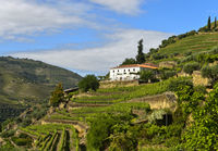 Weingut Quinta Da Le Rosa