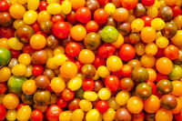 Full frame of fresh colorful tomatoes, background, texture
