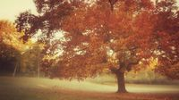 vintage autumn tree