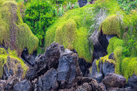 Felsen in Porto Moniz auf der Insel Madeira, Portugal