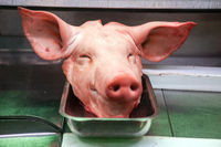 The head of a pig lies in a butcher shop