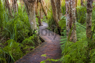 Boardwalk through lush coastal rainforest and swamp lands