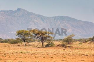 savanna in the Awash National Park, Ethiopia