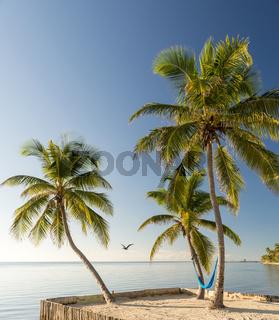 Tropical Island Beach With Hammock