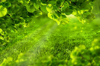 Beautiful eco green defocused spring or summer background with sunshine. Juicy young grass and foliage in rays of sunlight. Nature background. Soft toned. Copy space. Greeting card template