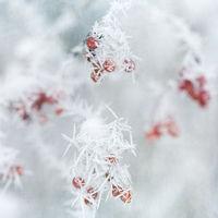 Eiskristalle nach einer Nacht mit starkem Raureif