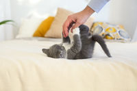 Kitten and a man. Cat on the bed and human hand