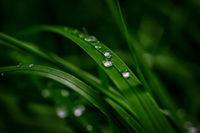 Beautiful rain dew drops on a dark green grass leaves in sun light. Nature background closeup. Copy space. Template for design greeting card