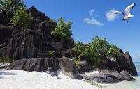 Black rocks and seagull . Bora-Bora. Polynesia