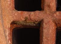 Lizard in the ruins